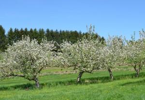 Apple orchard header